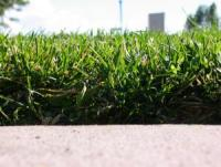 a buffalo grass lawn in Euless