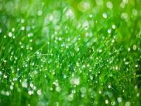 morning dew is a great sign for your lawn
